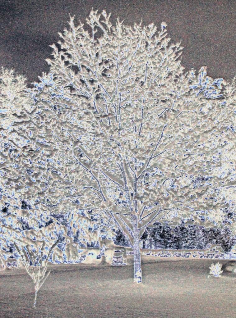 Luzerne Tree